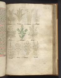 Drawings Of English Wild Plants Used In Medicine